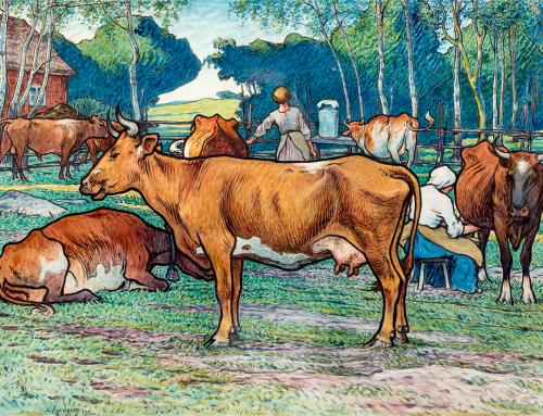 Korna mjölkas av Nils Kreuger